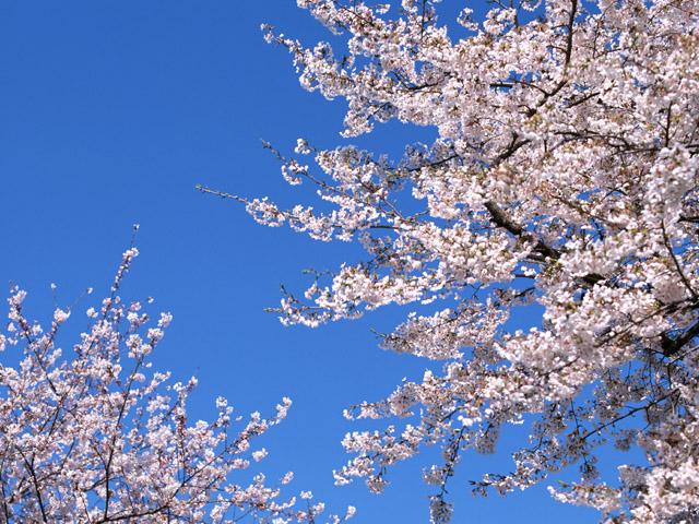 季節の挨拶3月上旬の挨拶やスピーチに使える言葉の例文や手紙・メールに使える文例