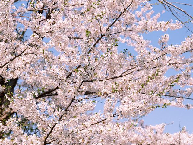 時候の挨拶4月上旬の挨拶やスピーチに使える言葉の例文や手紙・メールに使える文例