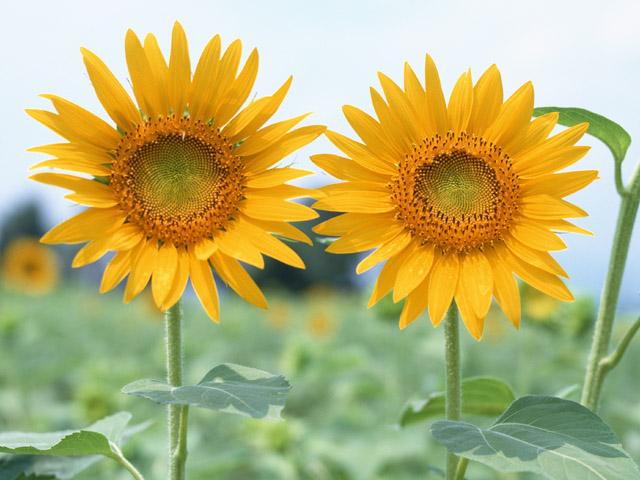 季節の挨拶7月下旬の挨拶やスピーチに使える言葉の例文や手紙・メールに使える文例