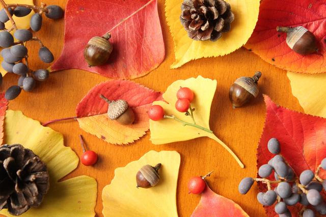 時候の挨拶10月上旬の挨拶やスピーチに使える言葉の例文や手紙・メールに使える文例