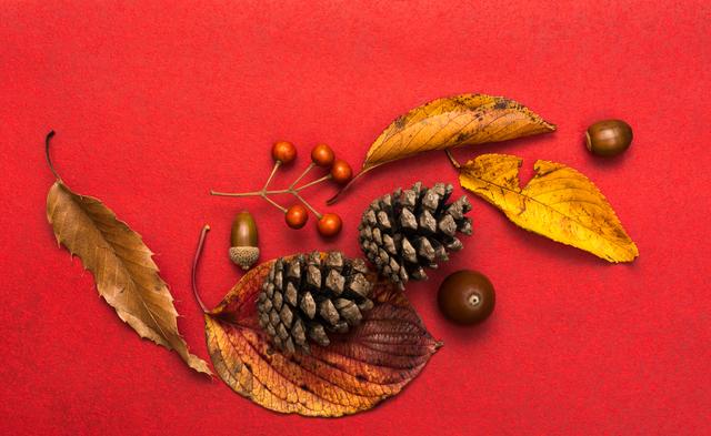 季節の挨拶10月下旬の挨拶やスピーチに使える言葉の例文や手紙・メールに使える文例
