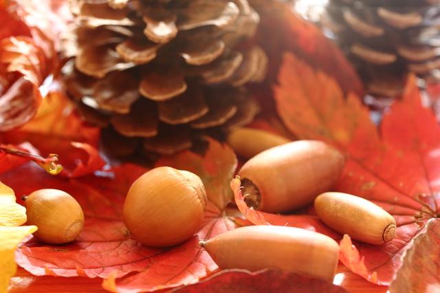 季節の挨拶11月上旬の挨拶やスピーチに使える言葉の例文や手紙・メールに使える文例