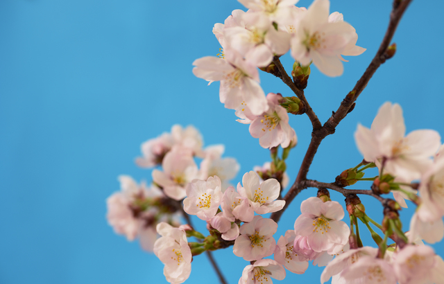 季節の挨拶4月上旬の挨拶やスピーチに使える言葉の例文や手紙・メールに使える文例