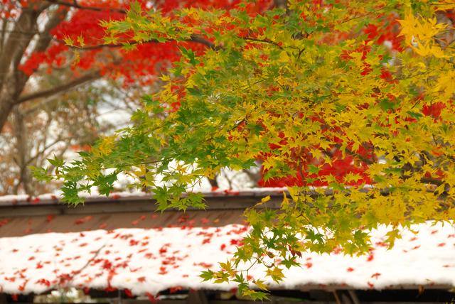 季節の挨拶11月下旬の挨拶やスピーチに使える言葉の例文や手紙・メールに使える文例