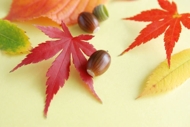 季節の挨拶10月上旬の挨拶やスピーチに使える言葉の例文や手紙・メールに使える文例
