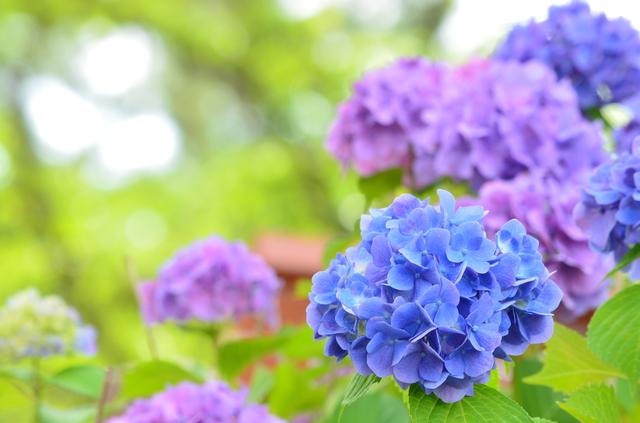 季節の挨拶6月下旬の挨拶やスピーチに使える言葉の例文や手紙・メールに使える文例