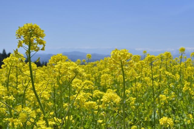 季節の挨拶4月下旬の挨拶やスピーチに使える言葉の例文や手紙・メールに使える文例