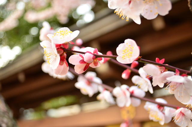 季節の挨拶3月下旬の挨拶やスピーチに使える言葉の例文や手紙・メールに使える文例