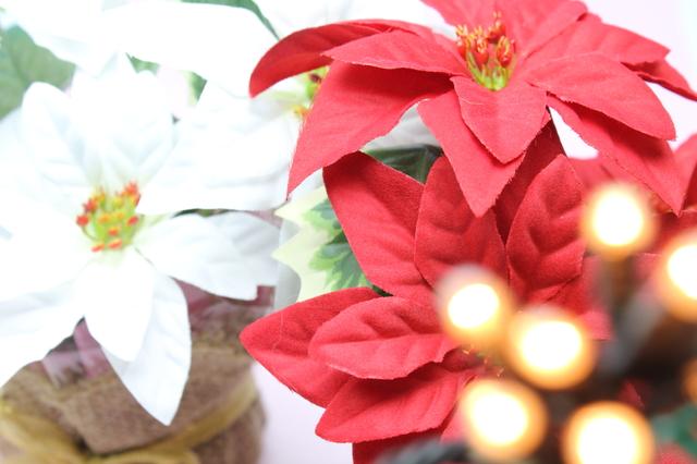時候の挨拶12月上旬の挨拶やスピーチに使える言葉の例文や手紙・メールに使える文例