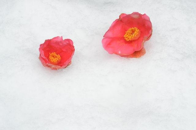 季節の挨拶2月上旬の挨拶やスピーチに使える言葉の例文や手紙・メールに使える文例