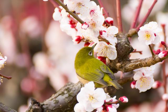 季語の挨拶3月下旬の挨拶やスピーチに使える言葉の例文や手紙・メールに使える文例