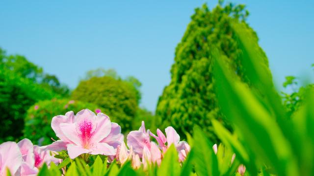 季語の挨拶4月下旬の挨拶やスピーチに使える言葉の例文や手紙・メールに使える文例