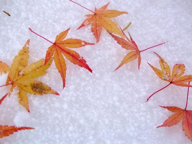 季語の挨拶11月下旬の挨拶やスピーチに使える言葉の例文や手紙・メールに使える文例