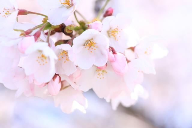季語の挨拶4月上旬の挨拶やスピーチに使える言葉の例文や手紙・メールに使える文例