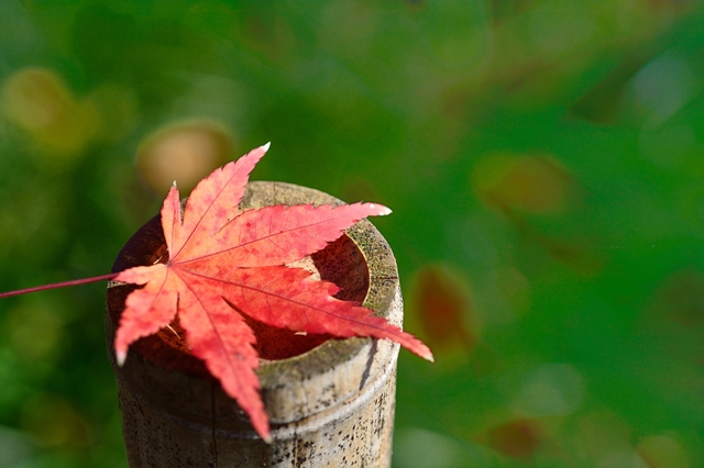 季語の挨拶10月上旬の挨拶やスピーチに使える言葉の例文や手紙・メールに使える文例