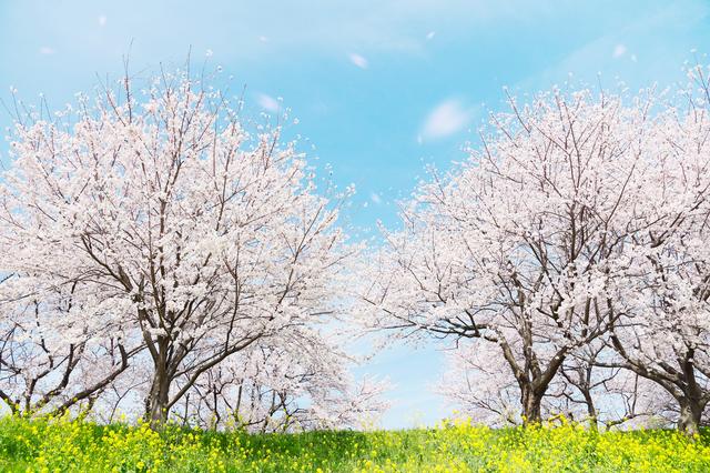 春の挨拶やスピーチに使える言葉の例文や手紙・メールに使える文例
